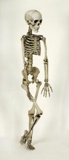Deko Skelett 160 cm sehr echt Schädel Knochen Totenkopf SONDERPREIS
