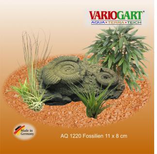 Fossilien - Dekoration für Aquarium & Terrarium - Vorschau 2