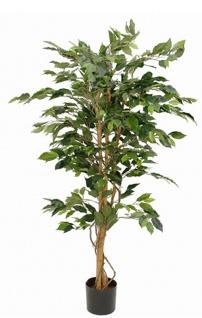 Ficus Benjamina 150cm, exklusive Blumentopf Grün