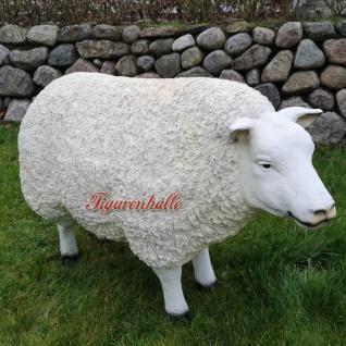 Schaf Schäfchen Cheviot Sheep Figur Kopf hoch Statue Skulptur Deko