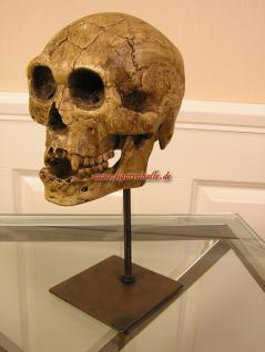 Anatomie Totenkopf Schädel Deko Arzt mit Ständer