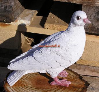 Taube weiß lebensecht Figur - Vorschau 1