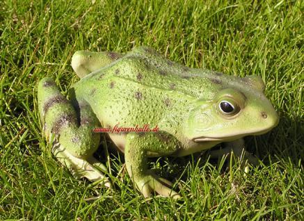 Frosch Kröte Figur Statue Skulptur lebensecht
