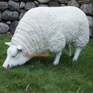 Schaf Schäfchen Cheviot Sheep Figur fressend Statue Skulptur Deko