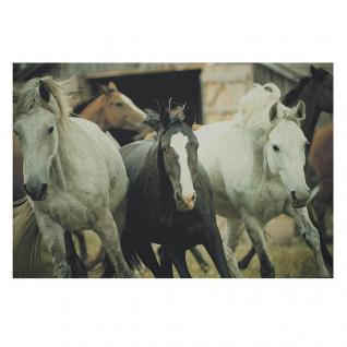 Fußmatte Fußabtreter Pferde Herde Tiermotiv Shabby Chic Kokosfaser Gummi