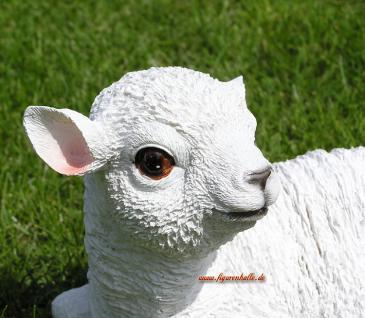 Süßes Lämmchen Schaf als Dekofigur für Haus und Garten - Vorschau 4