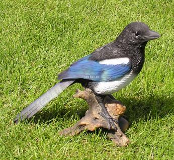 Elster Vogel Figur Dekofigur Heimischer Waldvogel