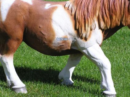 Pferd Dekofigur Pony Figur Reiterhof - Vorschau 3