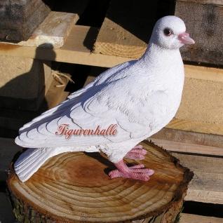Taube weiß lebensecht Figur