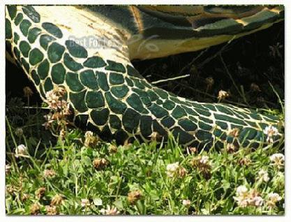 Wasserschildkröte Figur Schildkröte Dekofigur - Vorschau 5