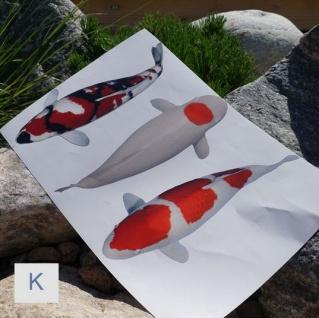 Koi Aufkleber Deko Fan Koiteich Mix Sticker Karpfen Bilder Teich Varietäten - Vorschau 2