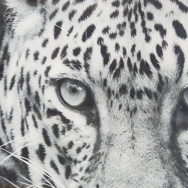 wandbild fotodruck leopard schwarz wei rahmen holz mit alu kaufen bei helga freier. Black Bedroom Furniture Sets. Home Design Ideas