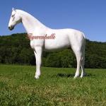 Schimmel Pferd Lebensgroß Figur Aufstellfigur