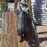 Katze Dekofigur Hängend Gartenfigur kletternd