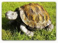 Schildkröte Dekofigur Garten Figur Tierfigur Deko