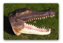 Krokodil-Kopf Kroko-Kopf Figur Deko Wanddeko
