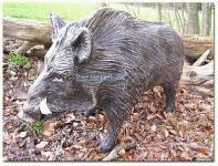 Wildschwein als Dekofigur Aufstellfigur
