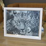 Wandbild Fotodruck Leopard Schwarz weiß Rahmen Holz mit Alu