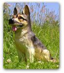Deutscher Schäferhund Figur Deko Statue