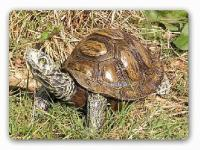 Schildkröte Figur Dekofigur Reptilien & Amphibien