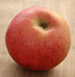 Apfelbaum Wildeshausener Goldrenette 60-80cm - fest und knackig