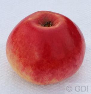 Apfelbaum Kaiser Alexander 60-80cm - saftig und süßsauer
