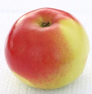 Apfelbaum Franksen Apfel 60-80cm - ein Herbstapfel