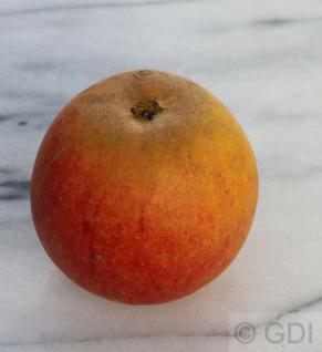 Apfelbaum Holsteiner Cox 60-80cm - süß und fest