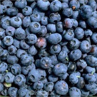 Heidelbeere North Blue 40-60cm - Vaccinium corymbosum