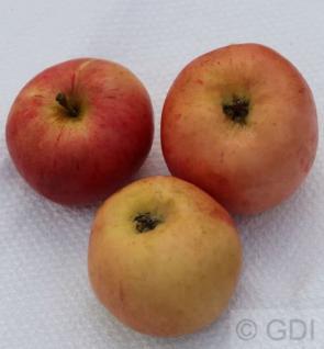 Apfelbaum Borowinka 60-80cm - feinwürzig und saftig