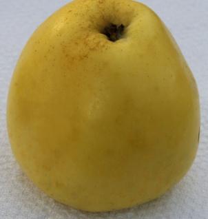Apfelbaum Gelber Richard 60-80cm - edel und feinwürzig