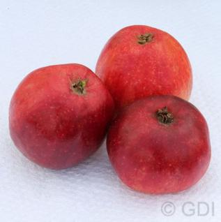 Apfelbaum Ostfriesischer Herbstcaivill 60-80cm - kleine Äpfel