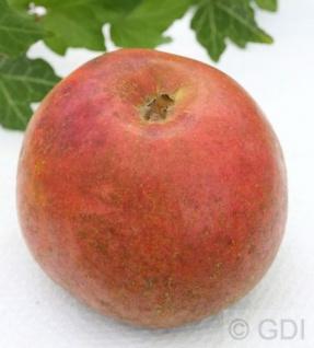 Apfelbaum Krügers Dickstiel 60-80cm - fest und edel
