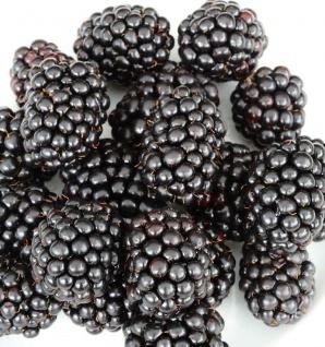 Brombeere Black Satin - Rubus fruticosus