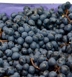 große blaue Weinrebe Nero 100-125cm - Vitis