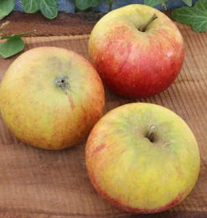 Apfelbaum Cox Orange 60-80cm - knackig und süß Tafelapfel