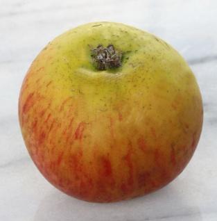 Apfelbaum Lanes Prinz Albert 60-80cm - fest und feinwürzig