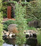Säulen Bambus Maasai® 100-125cm - Fargesia murielae