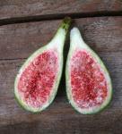 Feigenbaum Perretta 20-30cm - Ficus carica