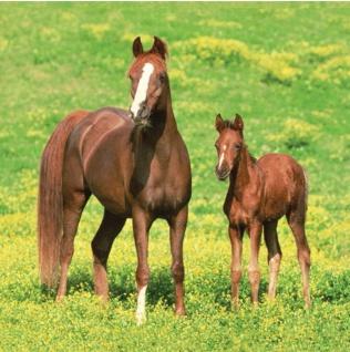 16 Servietten Wild Pferde