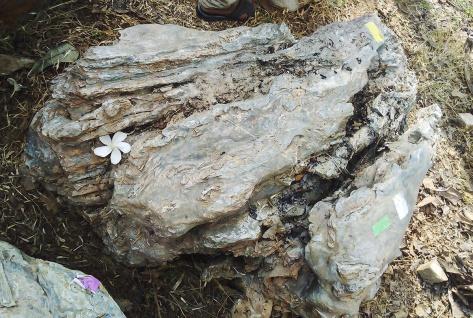 OZEANFINDLING Findling 48x127x95cm Naturstein Meeresgestein Skulptur Stein