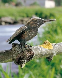 Bronzefigur Eisvogel H9cm Rottenecker Bronze Vogel Vögel Dekoration