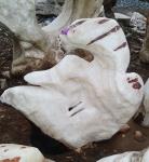 OZEANFINDLING Findling 61x69cm 101kg Natur Stein Meeresgestein Skulptur ONYX