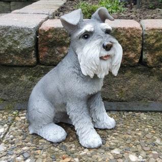 Gartenfigur Hund SCHNAUZER Figur lebensecht H. 34 cm Tierfigur Skulptur #9780