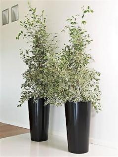 PFLANZKÜBEL TUIT schwarz Ø33cm Höhe 61cm Blumenkübel Blumensäule Pflanzensäule