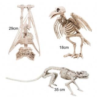 Ratten Fledermaus und Krähen Skelett 3er Set Tierskelette - Halloween Horror