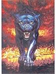 Alu Bild Puma