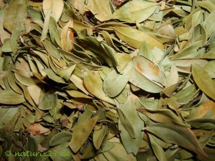 Naturix24 Myrtenblätter ganz 50 g