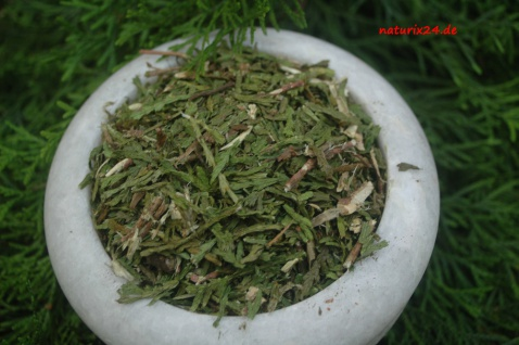 Naturix24 Thuja, Lebensbaum Triebspitzen geschnitten 1 kg