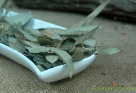 Naturix24 Eucalyptusblätter ganz 500 g